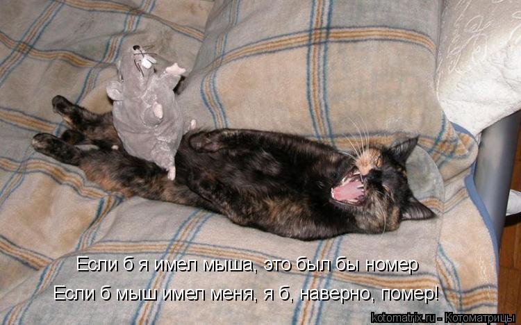 Котоматрица: Если б я имел мыша, это был бы номер Если б мыш имел меня, я б, наверно, помер!