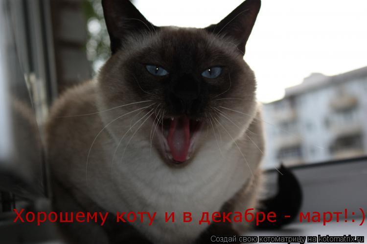 Котоматрица: Хорошему коту и в декабре - март!:)