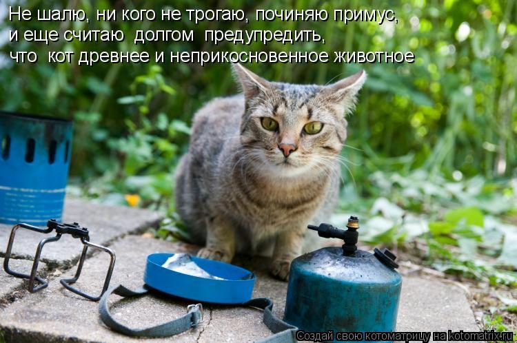 Котоматрица: Не шалю, ни кого не трогаю, починяю примус, и еще считаю  долгом  предупредить,  что  кот древнее и неприкосновенное животное