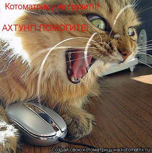 Котоматрица: Котоматрицу не грузит!!! АХТУНГ! ПОМОГИТЕ!