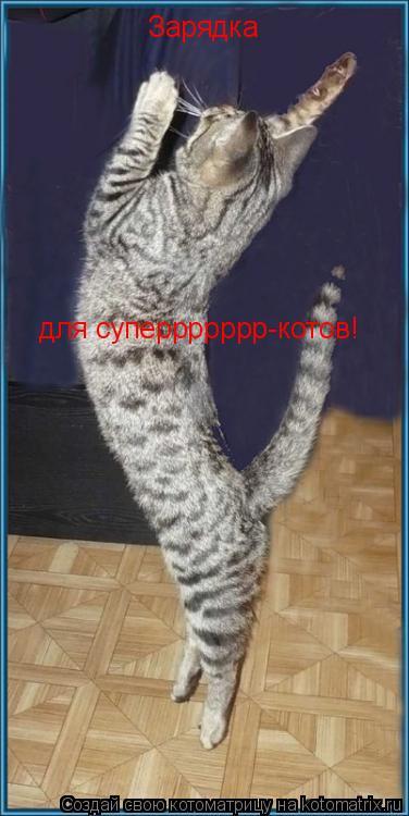 Котоматрица: Зарядка для суперрррррр-котов!