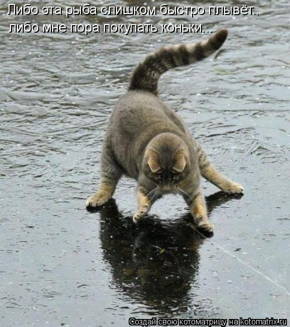 Котоматрица: Либо эта рыба слишком быстро плывёт.. либо мне пора покупать коньки...