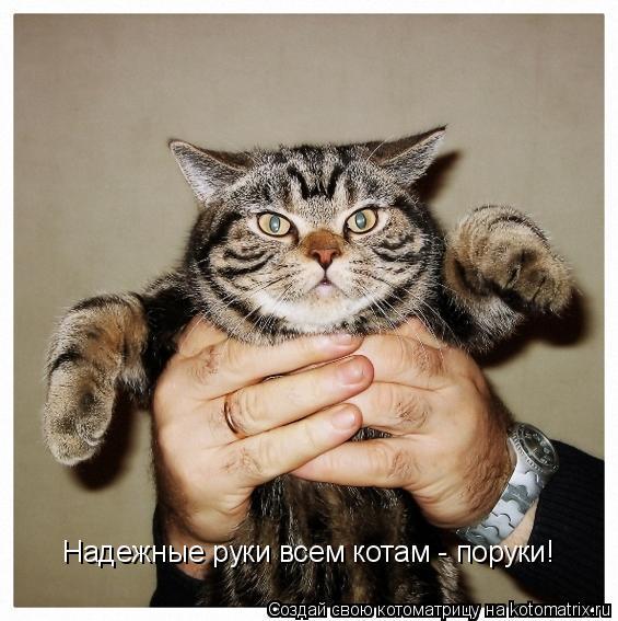 Котоматрица: Надежные руки всем котам - поруки!