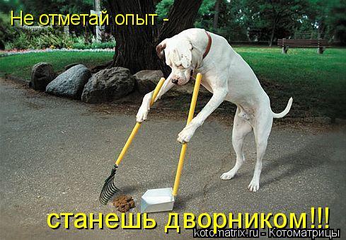 Котоматрица: Не отметай опыт -  станешь дворником!!!