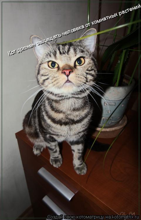 Котоматрица: Кот должен защищать человека от комнатных растений.