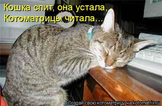Котоматрица: Кошка спит, она устала, Котоматрицы читала...
