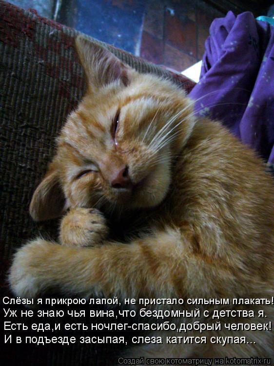 Котоматрица: И в подъезде засыпая, слеза катится скупая... Есть еда,и есть ночлег-спасибо,добрый человек! Уж не знаю чья вина,что бездомный с детства я. Слё