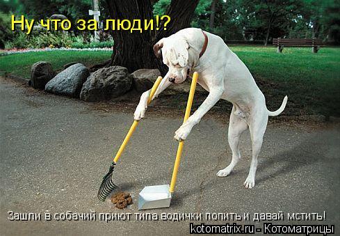 Котоматрица: Ну что за люди!? Зашли в собачий приют типа водички попить и давай мстить!