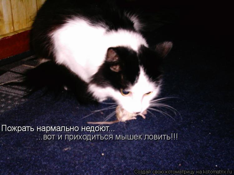Котоматрица: Пожрать нармально недоют... ...вот и приходиться мышек ловить!!!