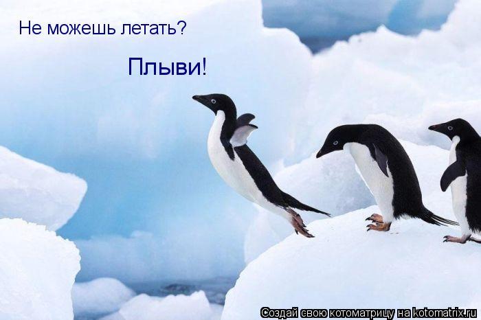 Котоматрица: Не можешь летать? Плыви!