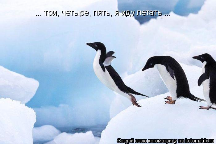 Котоматрица: ... три, четыре, пять, я иду летать ...