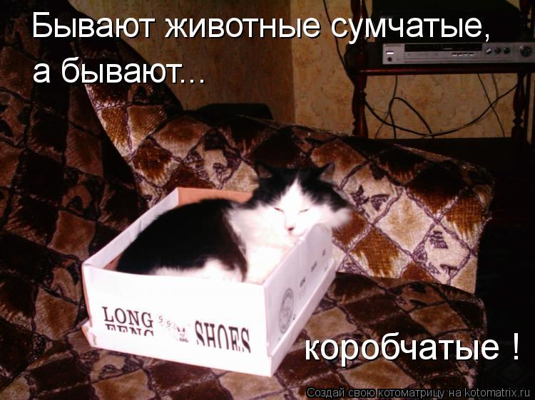 Котоматрица: Бывают животные сумчатые, а бывают... коробчатые !