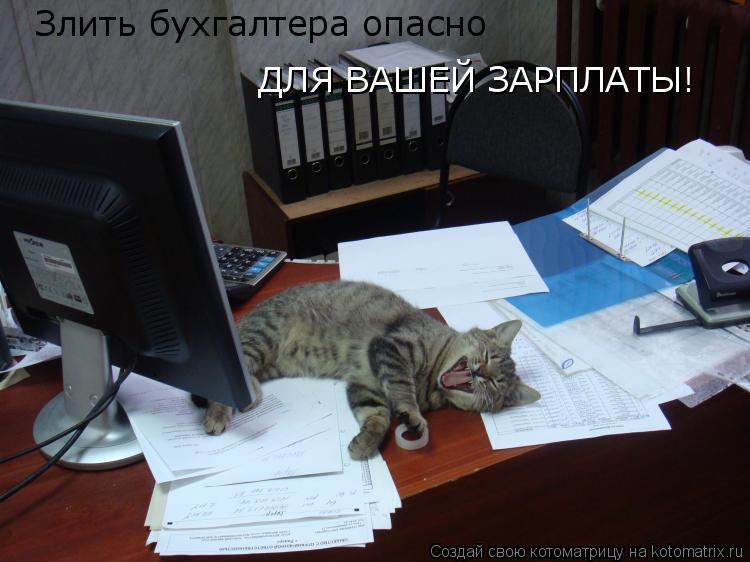 Котоматрица: Злить бухгалтера опасно ДЛЯ ВАШЕЙ ЗАРПЛАТЫ!