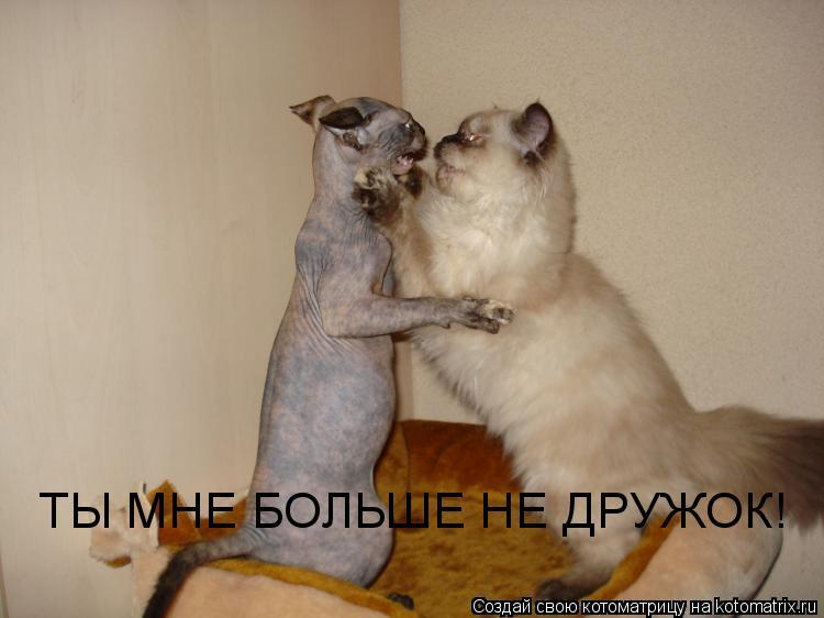 Котоматрица: ТЫ МНЕ БОЛЬШЕ НЕ ДРУЖОК!