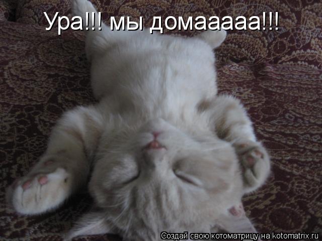 Котоматрица: Ура!!! мы домааааа!!!