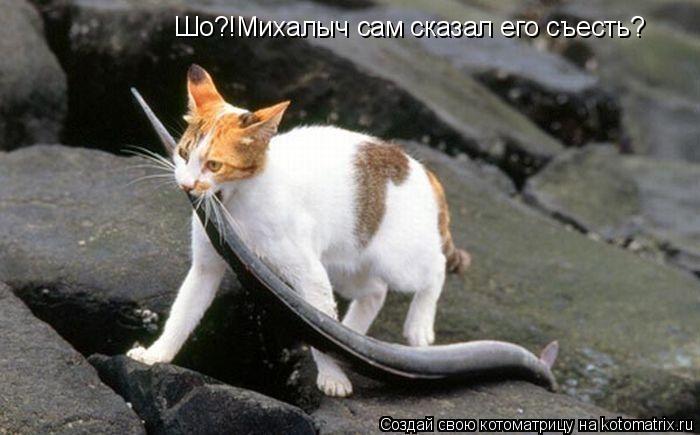 Котоматрица: Шо?!Михалыч сам сказал его съесть?