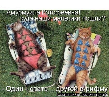 Котоматрица: - Амурмуила Котофеевна! куда наши мальчики пошли? - Один - спать... другой в рифму!