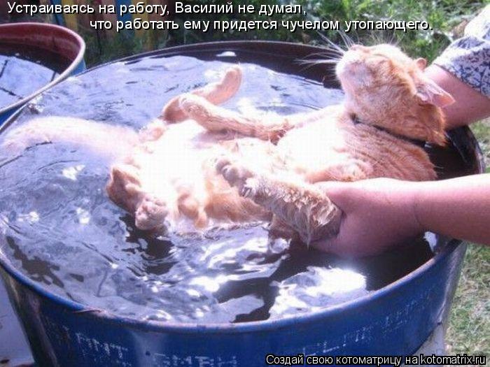 Котоматрица: Устраиваясь на работу, Василий не думал, что работать ему придется чучелом утопающего.