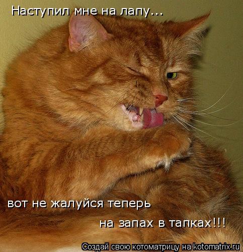 Котоматрица: Наступил мне на лапу... вот не жалуйся теперь на запах в тапках!!!