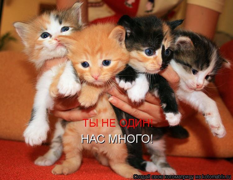 Котоматрица: ТЫ НЕ ОДИН!  НАС МНОГО!