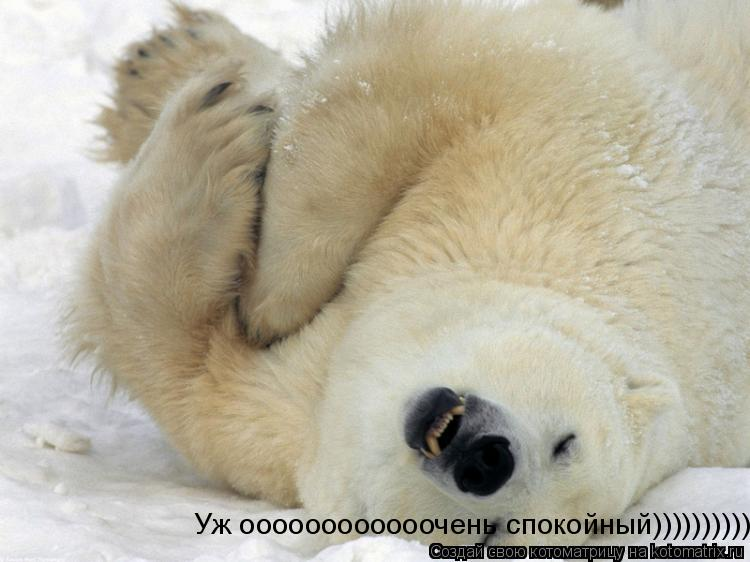 Котоматрица: Уж оооооооооооочень спокойный))))))))))