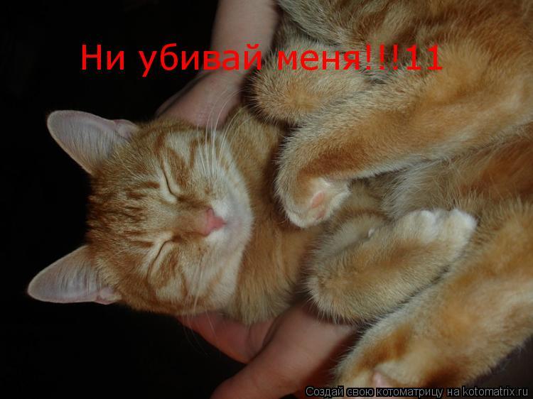 Котоматрица: Ни убивай меня!!!11