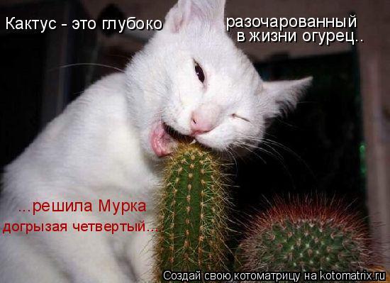 Котоматрица: Кактус - это глубоко разочарованный в жизни огурец.. ...решила Мурка догрызая четвертый...