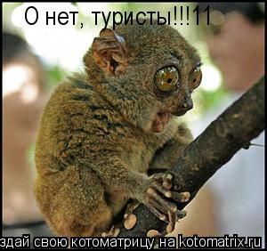 Котоматрица: О нет, туристы!!!11