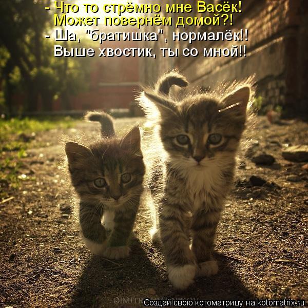 """Котоматрица: - Что то стрёмно мне Васёк! Может повернём домой?! - Ша, """"братишка"""", нормалёк!!  Выше хвостик, ты со мной!!"""