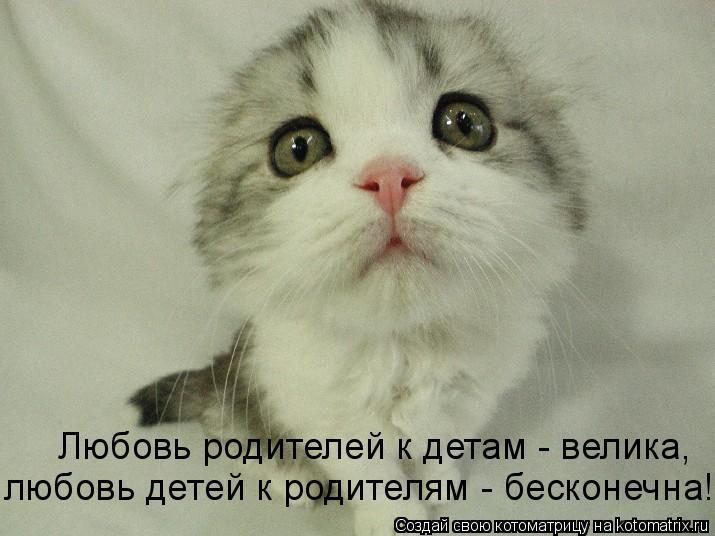 Котоматрица: Любовь родителей к детам - велика, любовь детей к родителям - бесконечна!