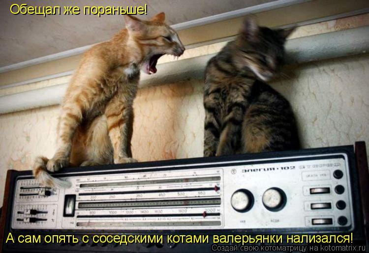 Котоматрица: Обещал же пораньше! А сам опять с соседскими котами валерьянки нализался!