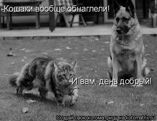 Котоматрица: -Кошаки вообще обнаглели! -И вам, день добрый!
