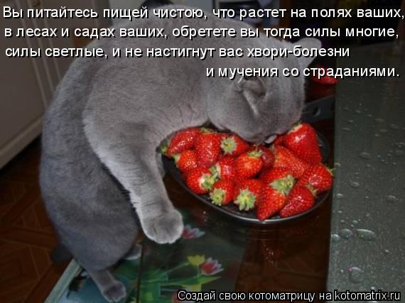 Котоматрица: Вы питайтесь пищей чистою, что растет на полях ваших, в лесах и садах ваших, обретете вы тогда силы многие, силы светлые, и не настигнут вас х