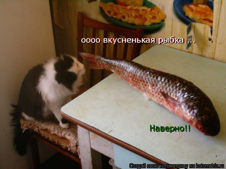 Котоматрица: оооо вкусненькая рыбка ... оооо вкусненькая рыбка ... Наверно!! Наверно!!