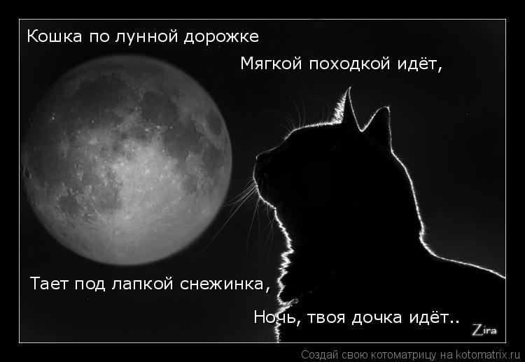 Котоматрица: Кошка по лунной дорожке Мягкой походкой идёт, Тает под лапкой снежинка, Ночь, твоя дочка идёт..