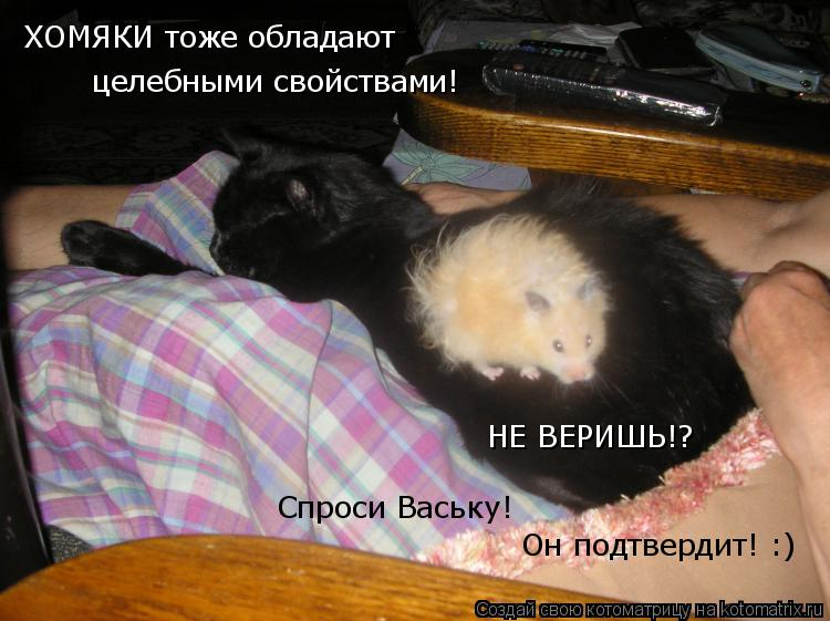 Котоматрица: ХОМЯКИ тоже обладают целебными свойствами! НЕ ВЕРИШЬ!? Спроси Ваську! Он подтвердит! :)