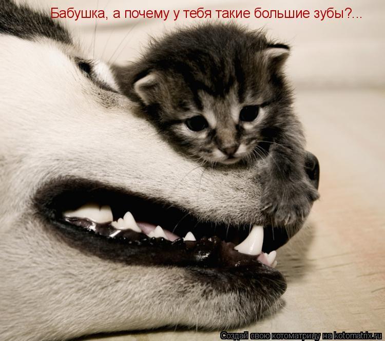 Котоматрица: Бабушка, а почему у тебя такие большие зубы?...