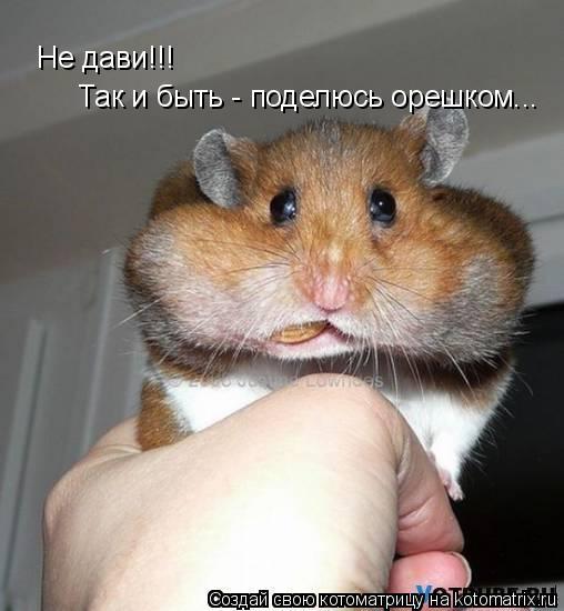 Котоматрица: Не дави!!! Так и быть - поделюсь орешком...