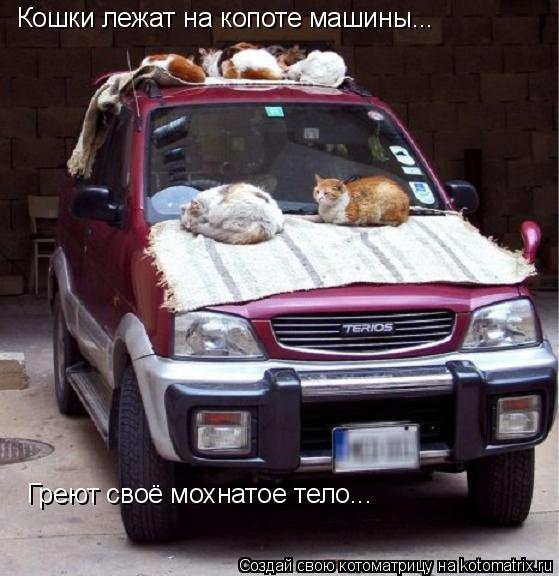 Котоматрица: Кошки лежат на копоте машины... Греют своё мохнатое тело...