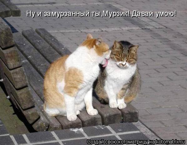 Котоматрица: Ну и замурзанный ты,Мурзик! Давай умою!