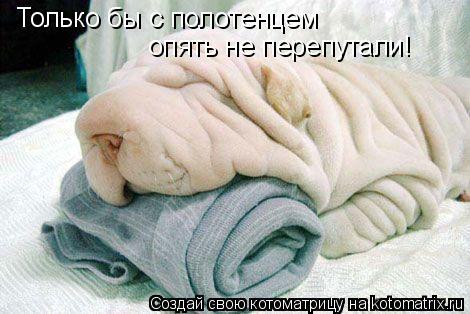 Котоматрица: Только бы с полотенцем  опять не перепутали!
