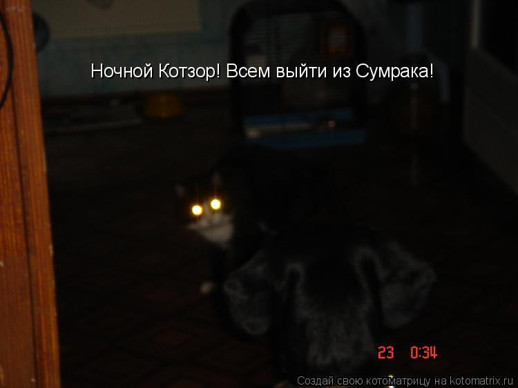 Котоматрица: Ночной Котзор! Всем выйти из Сумрака!