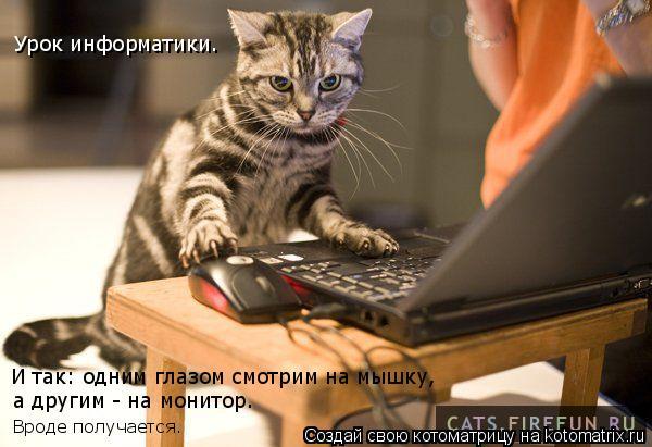 Котоматрица: И так: одним глазом смотрим на мышку, а другим - на монитор. Вроде получается. Урок информатики.