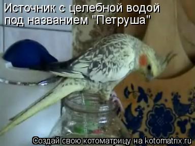 """Котоматрица: Источник с целебной водой Источник с целебной водой под названием """"Петруша"""""""