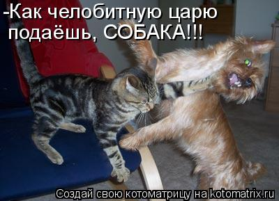 Котоматрица: -Как челобитную царю  подаёшь, СОБАКА!!!