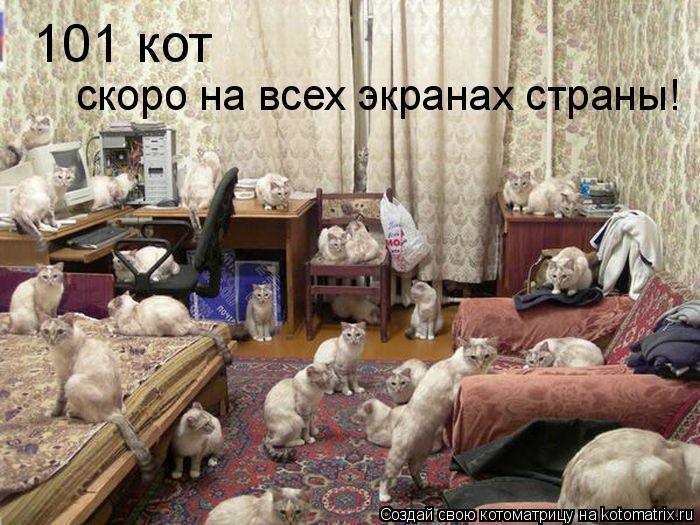 Котоматрица: 101 кот скоро на всех экранах страны!