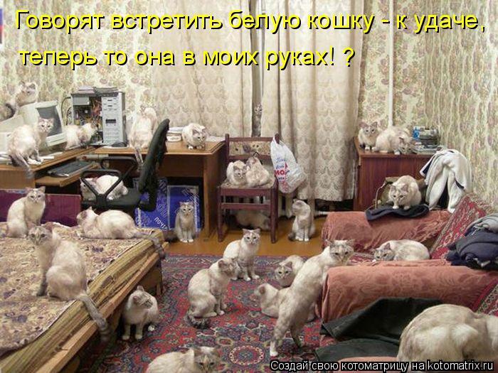Котоматрица: Говорят встретить белую кошку - к удаче, теперь то она в моих руках! ?