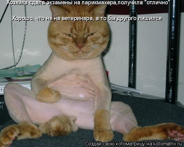 """Котоматрица: Хорошо, что не на ветеринара, а то бы другого лишился Хозяйка сдала экзамены на парикмахера,получила """"отлично"""""""