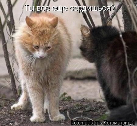 Котоматрица: Ты все еще сердишься?...
