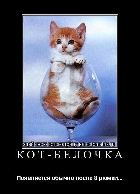 Котоматрица: Кот-Белочка Появляется обычно после 8 рюмки...